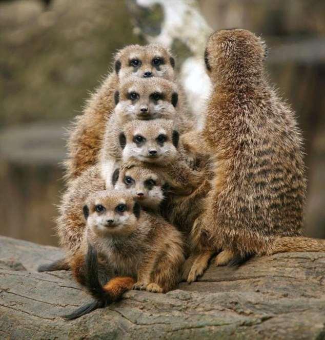 Забавные картинки с животными. Подборка zabavatut-zabavatut-30090404012020-2 картинка zabavatut-30090404012020-2