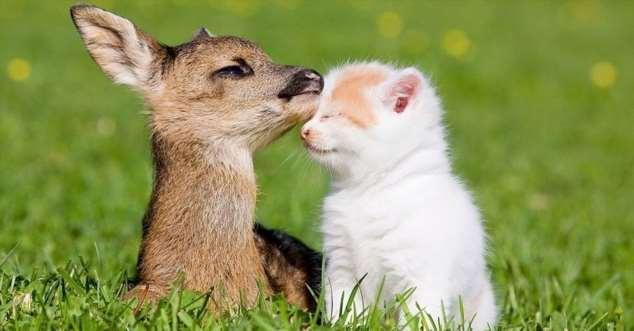 Забавные картинки с животными. Подборка zabavatut-zabavatut-30090404012020-8 картинка zabavatut-30090404012020-8