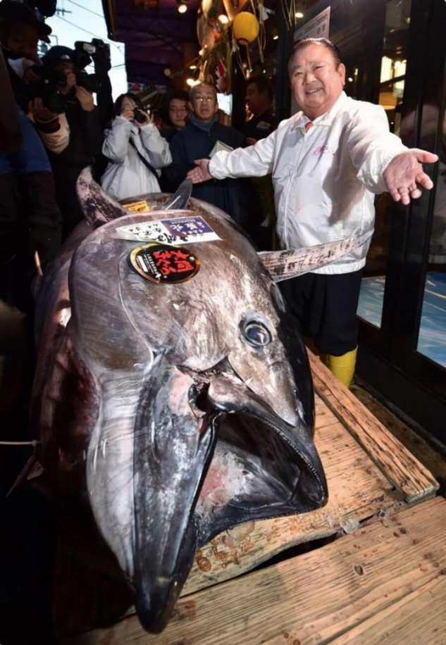 В Японии на аукционе продали тунца за $ 1 800 000