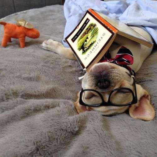 Возможно, вы не догадывались, но собаки тоже любят читать (22 фото)