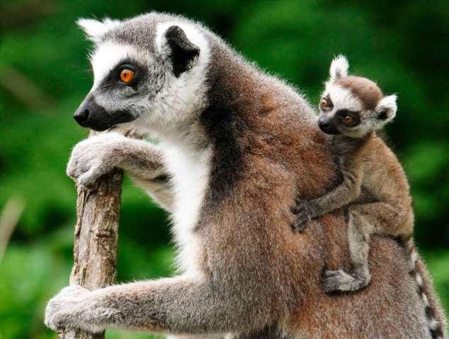 Забавные картинки с животными. Подборка zabavatut-zabavatut-52090404012020-10 картинка zabavatut-52090404012020-10