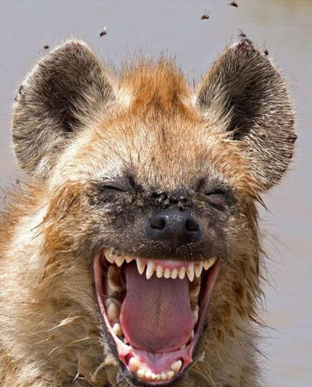 Забавные картинки с животными. Подборка zabavatut-zabavatut-52090404012020-11 картинка zabavatut-52090404012020-11