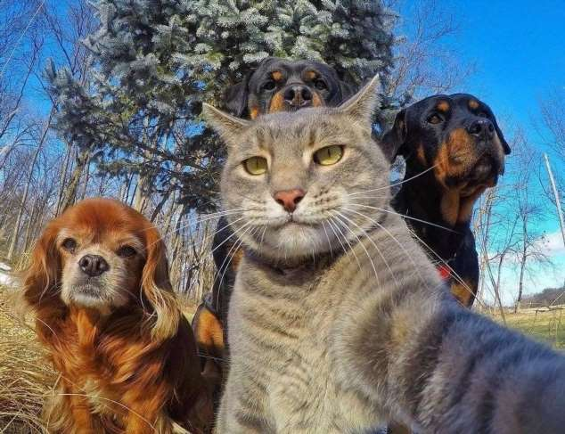 Забавные картинки с животными. Подборка zabavatut-zabavatut-52090404012020-12 картинка zabavatut-52090404012020-12