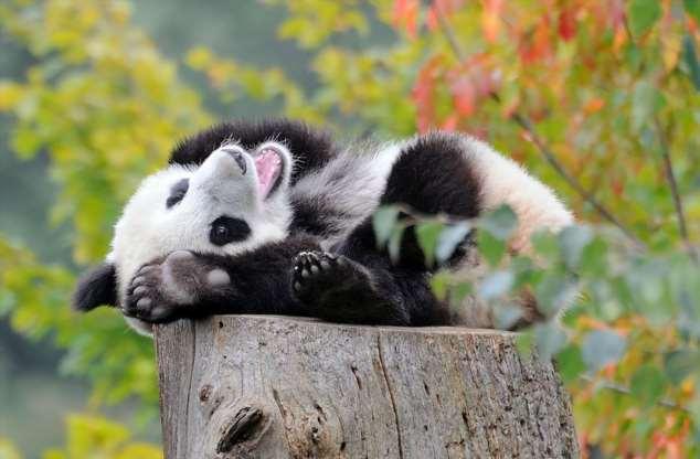 Забавные картинки с животными. Подборка zabavatut-zabavatut-52090404012020-2 картинка zabavatut-52090404012020-2