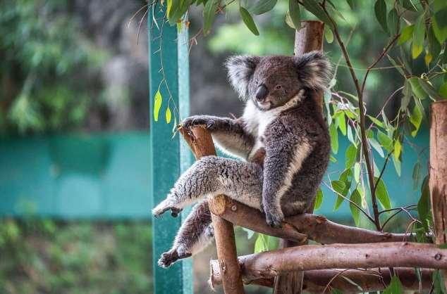 Забавные картинки с животными. Подборка zabavatut-zabavatut-52090404012020-4 картинка zabavatut-52090404012020-4