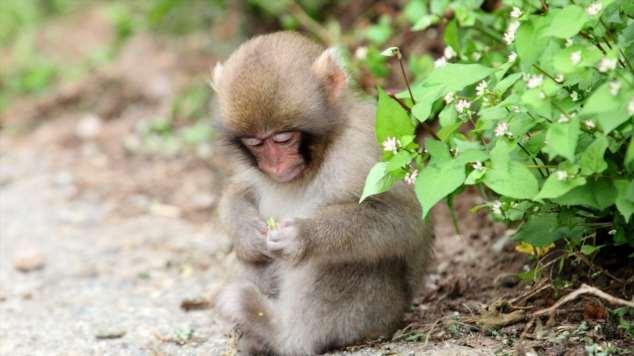 Забавные картинки с животными. Подборка zabavatut-zabavatut-13060403022020-1 картинка zabavatut-13060403022020-1