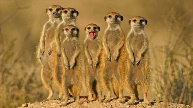 Забавные картинки с животными. Подборка zabavatut-zabavatut-13060403022020-18 картинка zabavatut-13060403022020-18