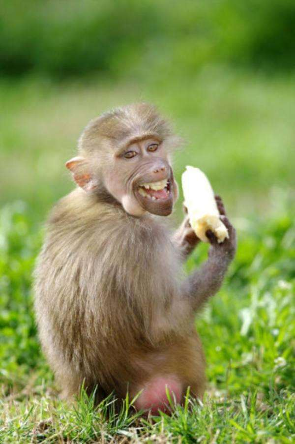 Забавные картинки с животными. Подборка zabavatut-zabavatut-13060403022020-4 картинка zabavatut-13060403022020-4
