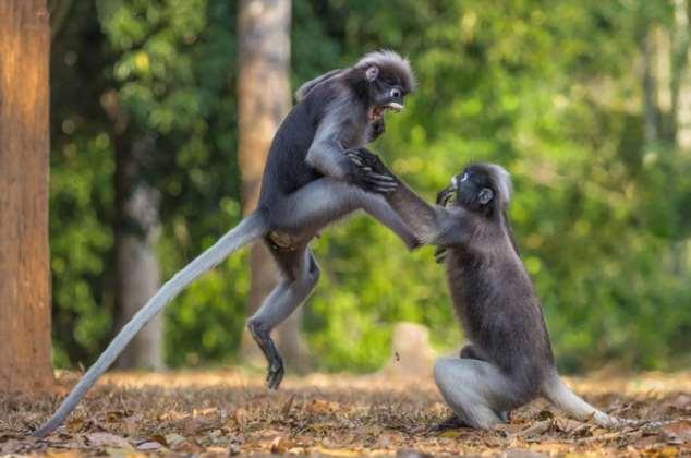 Забавные картинки с животными. Подборка zabavatut-zabavatut-13060403022020-8 картинка zabavatut-13060403022020-8