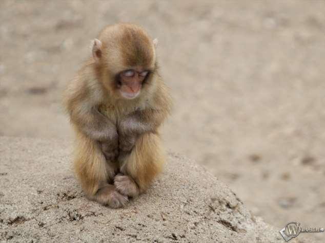 Забавные картинки с животными. Подборка №zabavatut-25370709022020