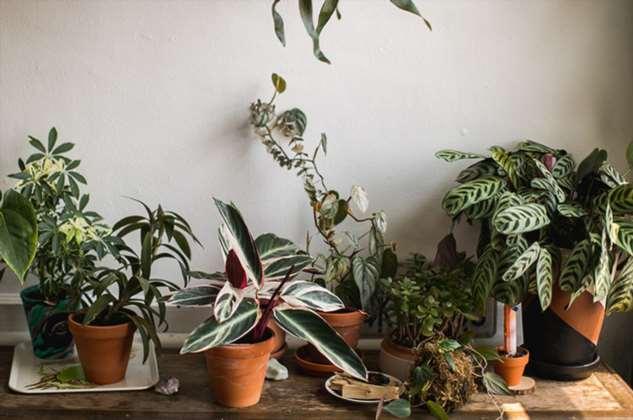 6 плюсов домашних растений