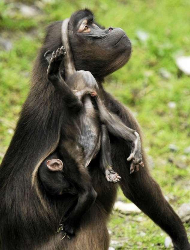 Забавные картинки с животными. Подборка №zabavatut-35050406042020
