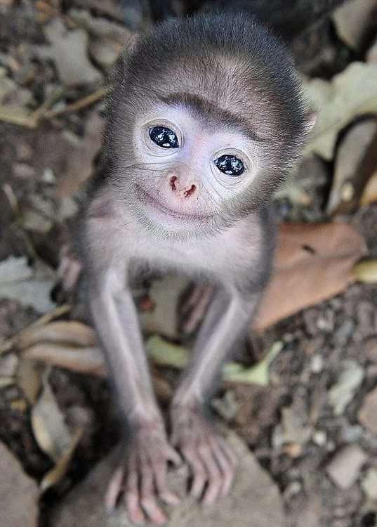 Забавные картинки с животными. Подборка zabavatut-ani-zabavatut-ani-40050420092020-4 картинка zabavatut-ani-40050420092020-4