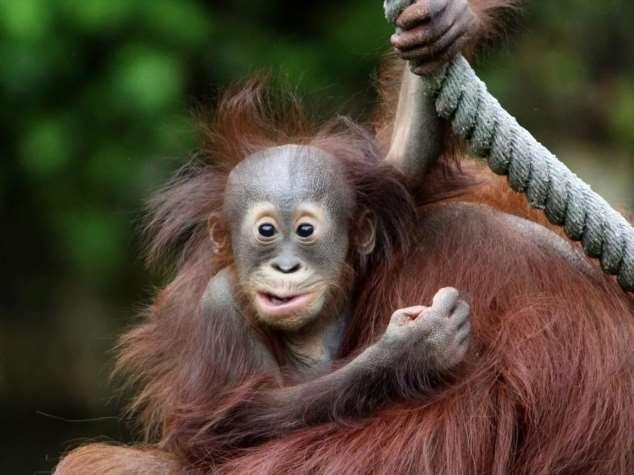 Забавные картинки с животными. Подборка zabavatut-ani-zabavatut-ani-40050420092020-6 картинка zabavatut-ani-40050420092020-6